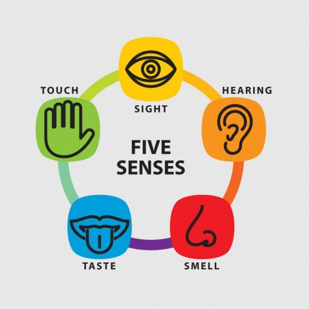 fall learning series part the five senses five senses icon set 62147502195 jpg